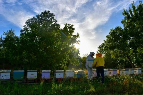 Pčelarstvo za početnike